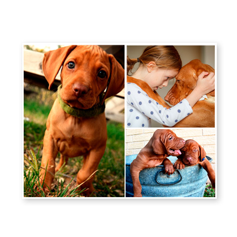 Collage Prints